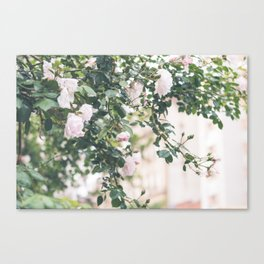 Roses in the West Village - NYC Photography Canvas Print