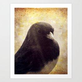 Dark-eyed Junco Art Print