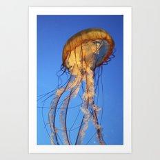 Jellyfish in Color Art Print