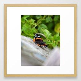Butterfly Resting Framed Art Print
