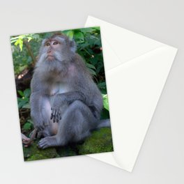 Mother and child macaques - Greg Katz Stationery Cards
