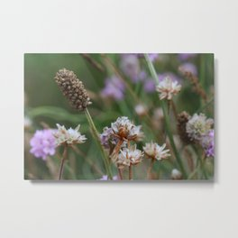 Irish Lavender Metal Print