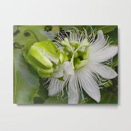 """Passiflora (i)"" by ICA PAVON Metal Print"
