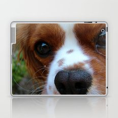 Cavalier King Charles Spaniel Laptop & iPad Skin