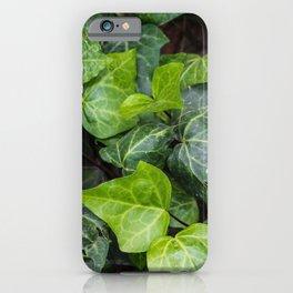 Mediterranean Ivy iPhone Case