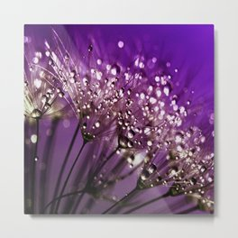 Violet Dewdrops Metal Print