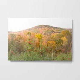 Autumn Upstate Metal Print