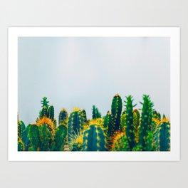 Field Of Prickly Green Cactus Art Print