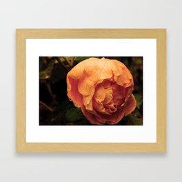 Rose on a sad day Framed Art Print
