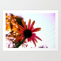Pink in the Afternoon Art Print