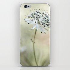 Astrantia iPhone & iPod Skin