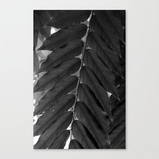 Open up Canvas Print