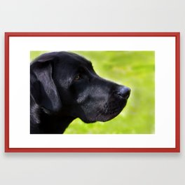 Black  Labrador Framed Art Print