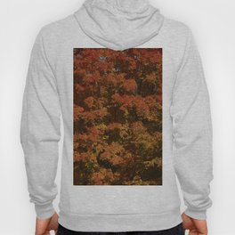 Autumn in Canada Hoody