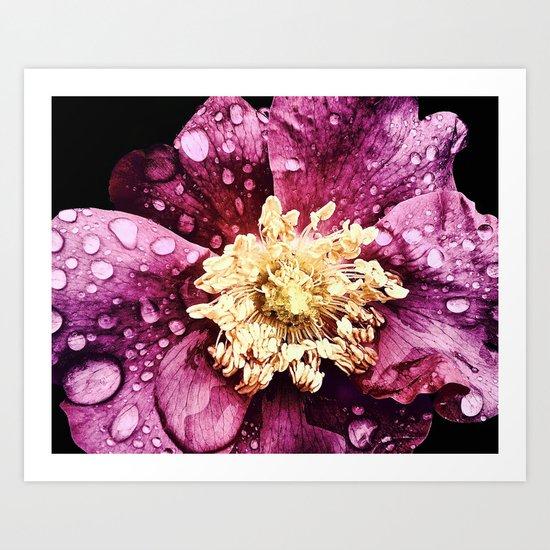 Raindrops On Deep Pink Bloom Art Print