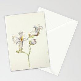 Catalpa Blossom 3 Stationery Cards