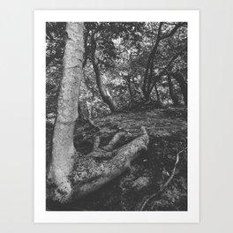 Tree Foot Art Print