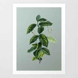 Vintage Broadleaf Spindle Botanical Illustration on Mint Green Art Print