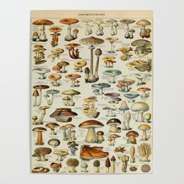 Mushrooms Vintage Scientific Illustration French Language Encyclopedia Lithographs Educational Poster