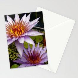Nymphaea 'Rhonda Kay' III Stationery Cards
