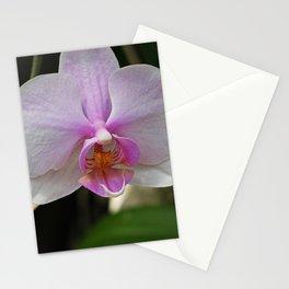 Unfolding Strength Stationery Cards