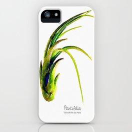 Tillandsia Paucifolia Air Plant Watercolors iPhone Case
