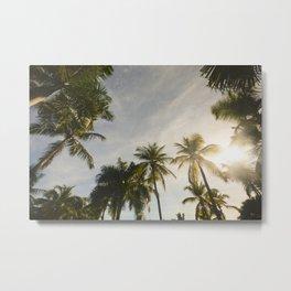 Palm Trees. Metal Print