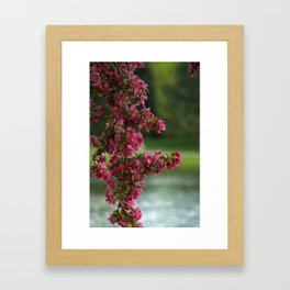 A Sign of Spring to come Framed Art Print