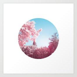 Cherry Blossom - pink & blue Art Print