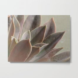 TEXTURES: Succulent Looks East Metal Print