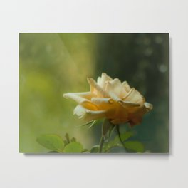 Yellow Rose Soft Rainy Day by CheyAnne Sexton Metal Print