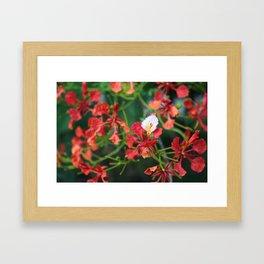 """Poinciana turns over a new leaf"" Framed Art Print"