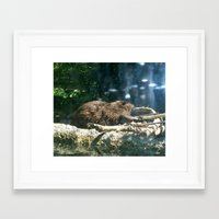 beaver Framed Art Prints featuring beaver by Gary Michael Miller