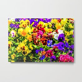 Viola Tricolor Pansy Flowers Metal Print