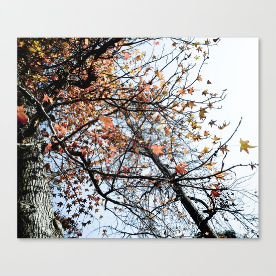 Fall II Canvas Print