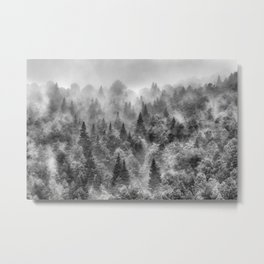 Pinsapos into the woods. BW. Foggy sunrise Metal Print