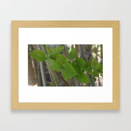 Spring 2 Framed Art Print