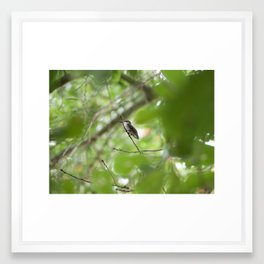 Hummingbird Framed Art Print