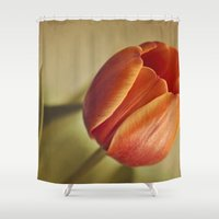 tulip Shower Curtains featuring Tulip by Lawson Images