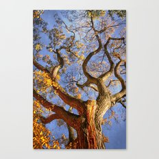 Curls Canvas Print