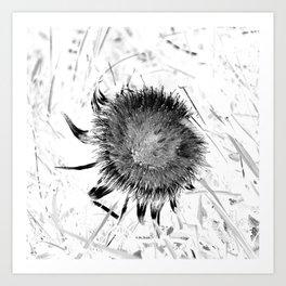 black and white botanical photography, thistle flower Art Print