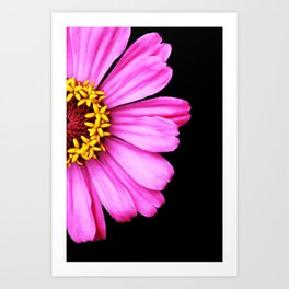 Bright Pink Zinnia Flower Photo Art Print