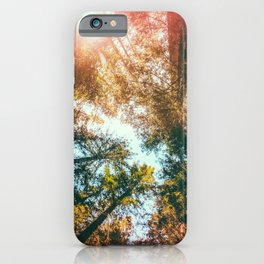 California Redwoods Sun-rays and Sky iPhone Case