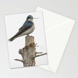 Tree Swallow with Twig Stationery Cards