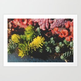 Rainbow Succulents Art Print