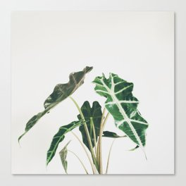 Elephant Ear Canvas Print