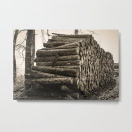 Poltery Site (Wood Storage Area) After Storm Victoria Möhne Forest 4 sepia Metal Print