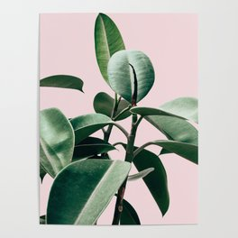 Plant, Green, Leaf, Pink, Minimal, Trendy decor, Interior, Wall art, Photo Art Print Poster