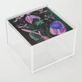 Botanical Study #3, Vintage Botanical Illustration Collage Art Acrylic Box