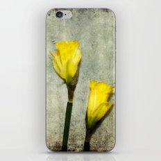 Daffodil's iPhone & iPod Skin